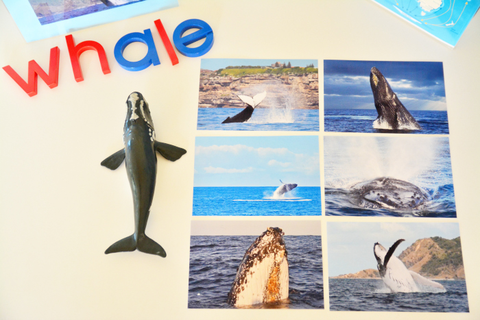 Whale cards photographic at HWM copy
