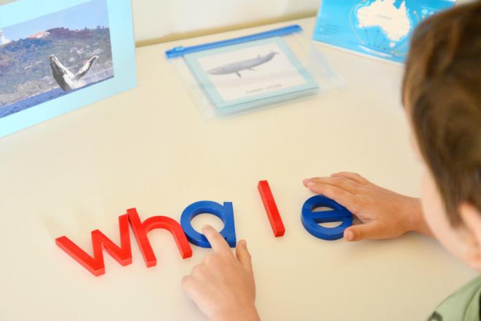 Movable Alphabet Whale #3