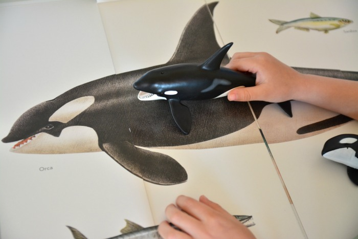 Orca - at How we Montessori
