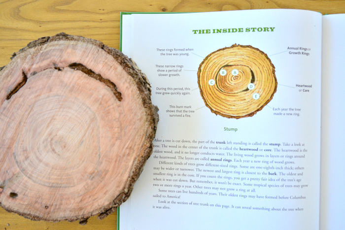 The Tree Book - looking at a tree stump at How we Montessori