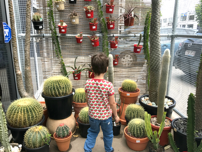 Otis loving the plants at Mappins Nursery, West End, Brisbane