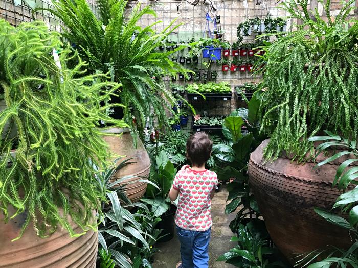 Best Nursery in Brisbane, Mappins Nursery, West End