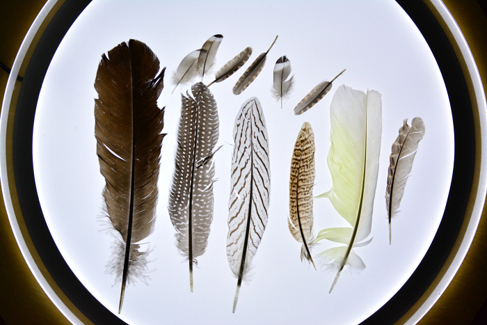 Gorgeous feathers on the light table
