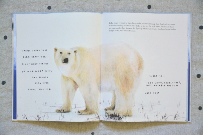 The Polar Bear by Jenni Desmond at HWM