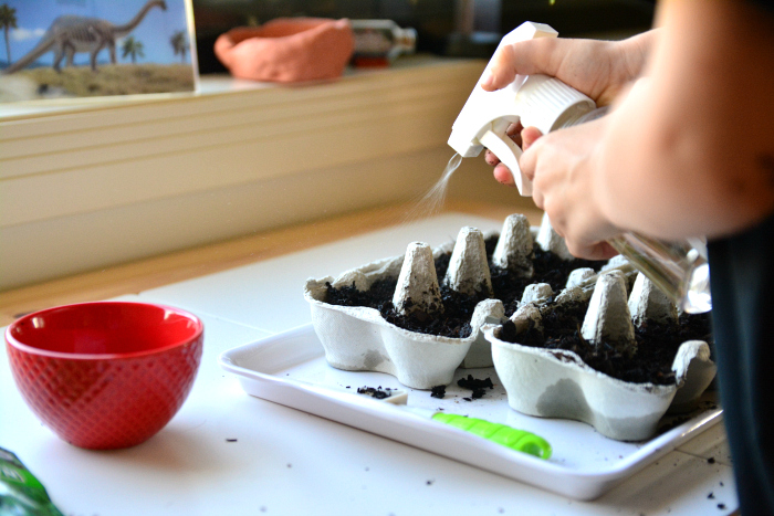 Spraying seeds at How we Montessori, egg carton seedlings