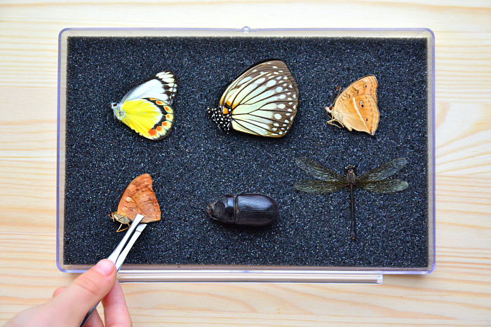 Otis' collection - butteflies, moths, dragonfly at How we Montessori