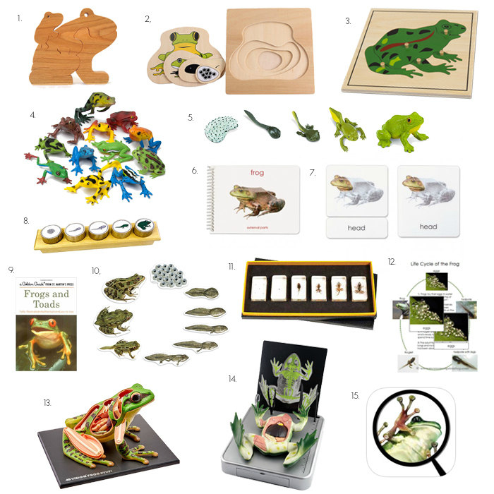 15 Fun Montessori Frog Materials for Home or School