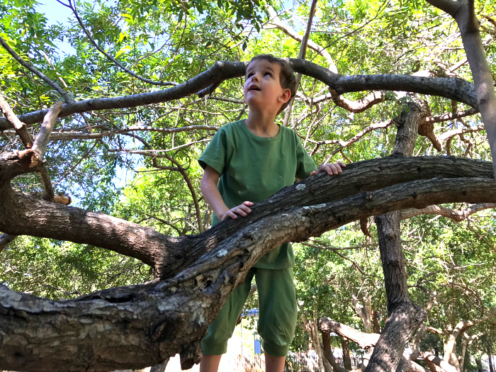 Otis climbing a tree in Into the Woods Clothing Brisbane at How we Montessori