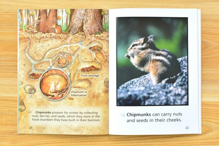 We Both Read  Animals Under Our Feet  Chipmunks at How we Montessori