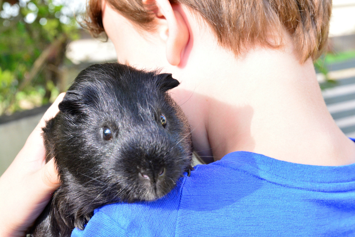 Caspar with his Guinea Pig at How we Montessori