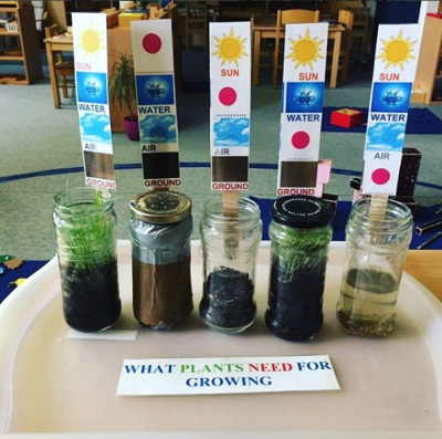What plants need for growing at Montessori Little Pearl