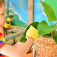 Otis leaf dusting at How we Montessori  Care of Plants