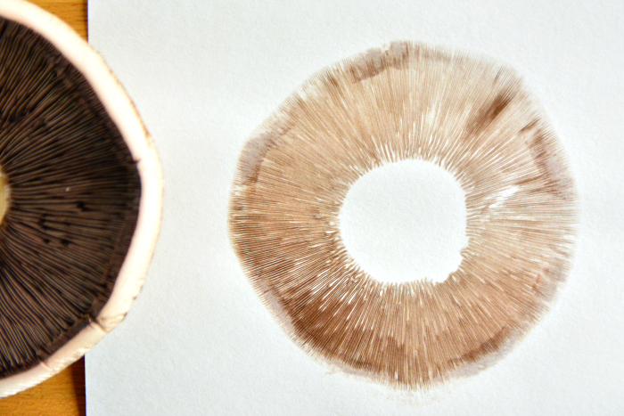 Mushroom Spore Prints  finished at How we Montessori