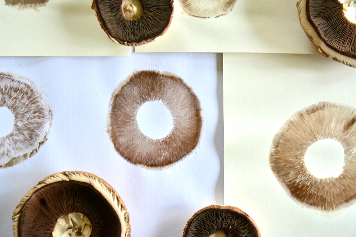 Spore prints finished at How we Montessori