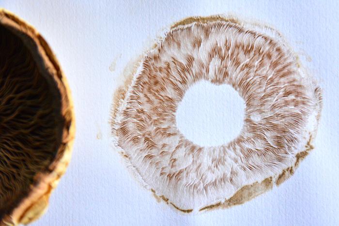 How we Montessori Nature Study  Mushroom spore prints