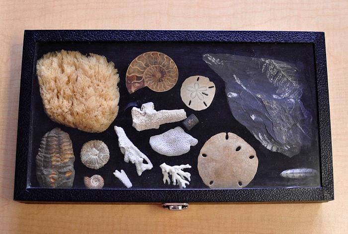 Villa di Maria Montessori School Blog - fossil tray