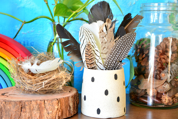 Collections at HWM  Feathers