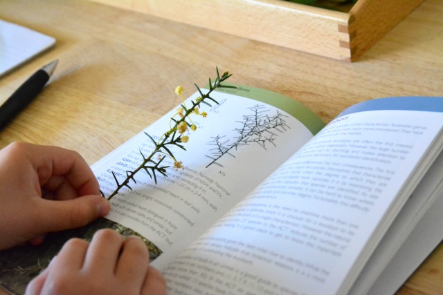 Caspar identifying native plants