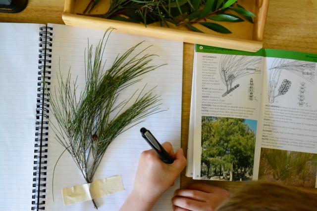 Caspar identifying native plant species