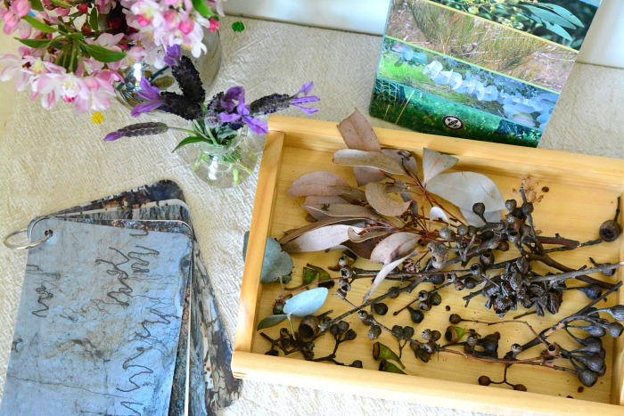 Nature Table October 2014