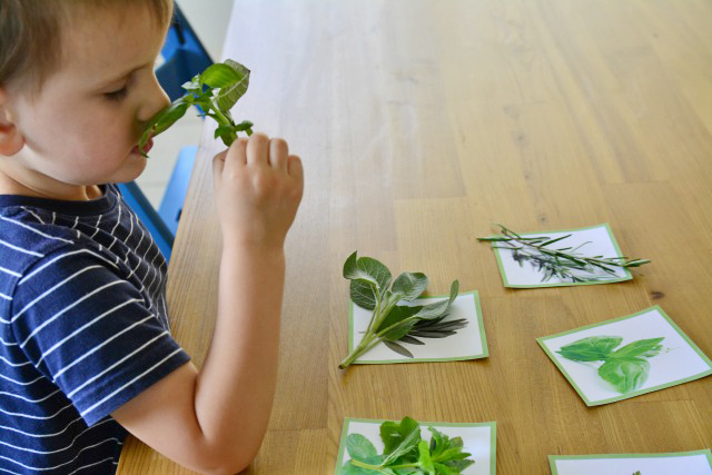 Otis smelling and matching herbs - relaxing activity