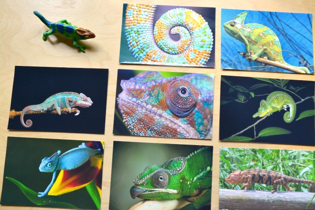 Chameleon photographs at How we Montessori