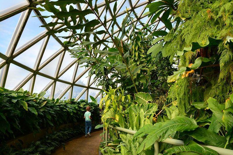 Brisbane Botanic Gardens #5