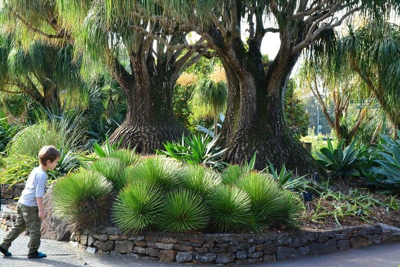 Brisbane Botanic Gardens #9