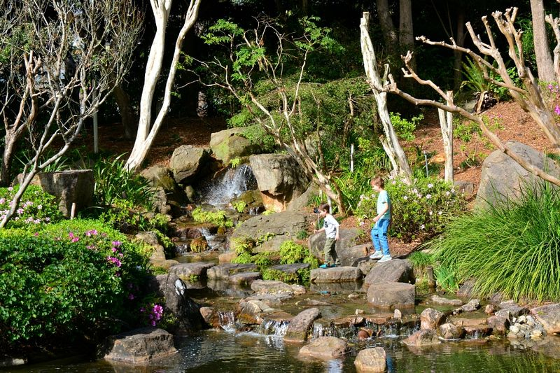 Brisbane Botanic Gardens #17