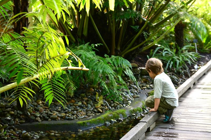 Brisbane Botanic Gardens #20