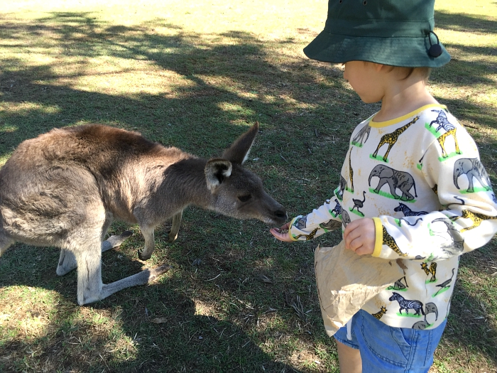 Feeding kangaroos Otis