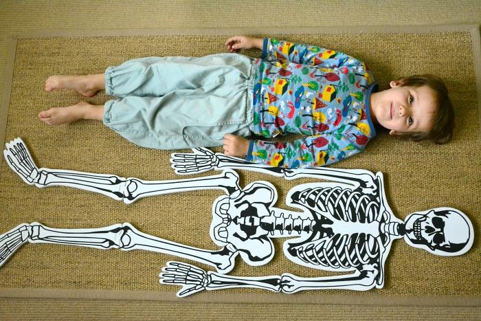 Otis at How we Montessori, Child Sized Skeleton Puzzle