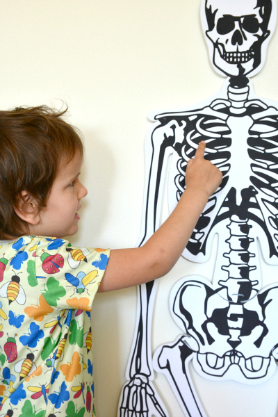 Learning about Skeletons, skeleton puzzle on the wall