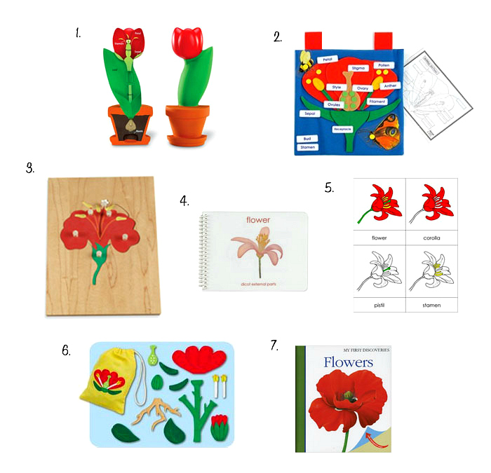 How we Montessori Parts of a Flower Materials, Flower Puzzles and Three Part Cards