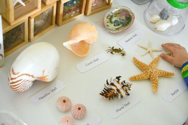 A Montessori Nature Table How We Montessori