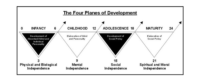 Montessori - The Four Planes of Development