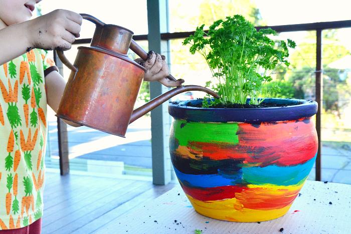 HWM Otis watering his parsley plant
