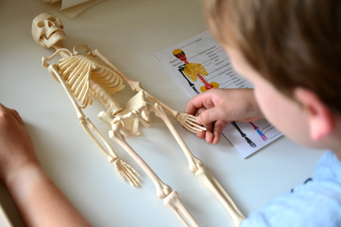 Caspar naming skeleton parts at How we Montessori