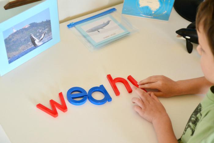 Whale movable alphabet #1