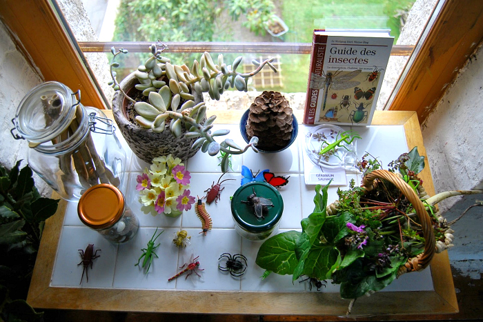 Nature Table at Merci Montessori