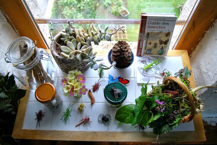 Nature Table at Merci Montessori
