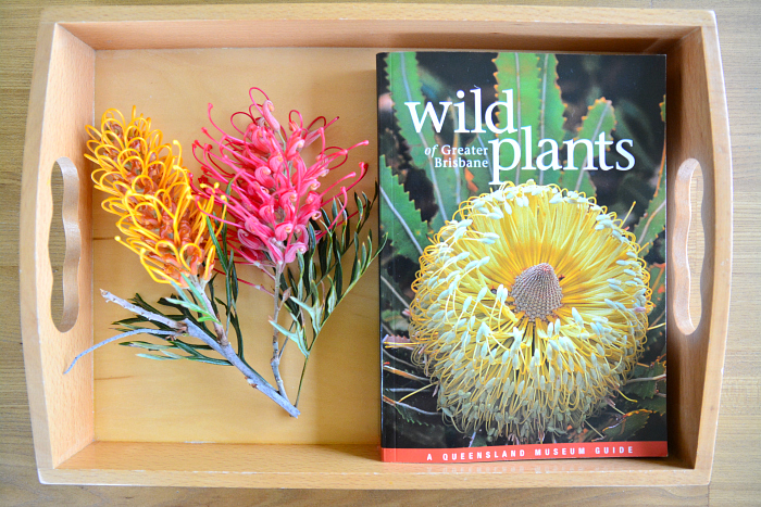 Wild Plants of Greater Brisbane, Local Guide, at How we Montessori