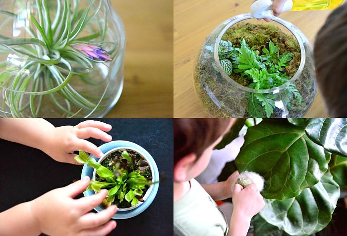 Plants at How we Montessori