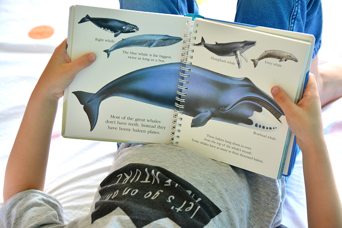 HWM Otis reading in bed - Whales - My First Discoveries