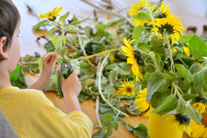 Otis trimming sunflowers at How we Montessori