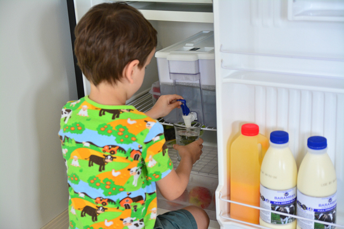 Otis at five years with access to small fridge with water, drinks and fruit.