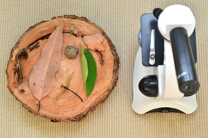 Items from the Garden to put under the microsope at How we Montessori