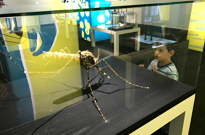 Otis with Mosquito at the Queensland Museum at How we Montessori