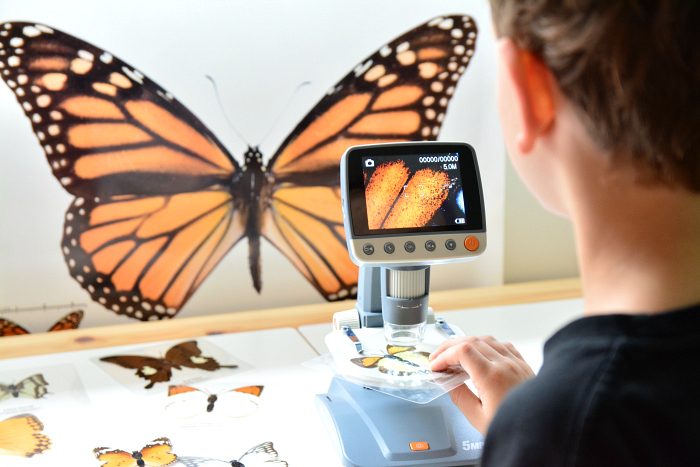 Butterfly exploration table - How we Montessori