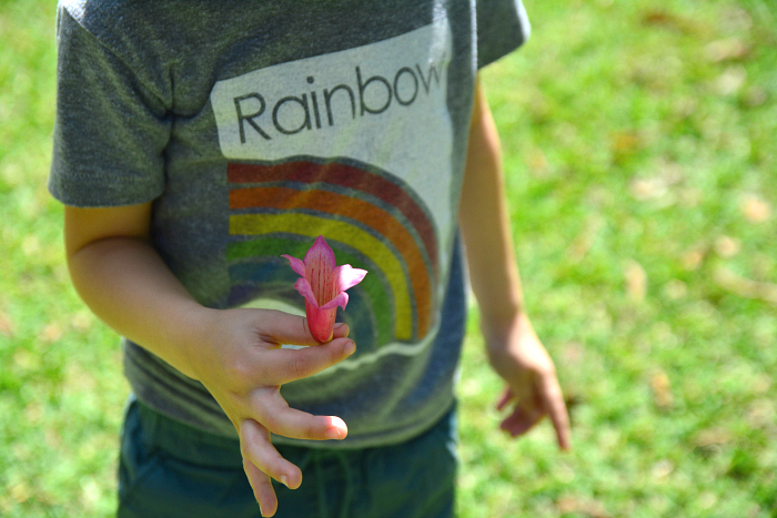 Diversity Audit at How we Montessori